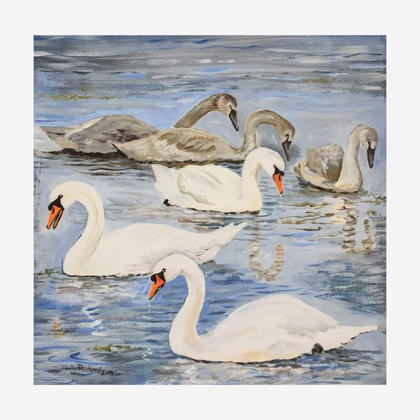 Swans at Lower Voe