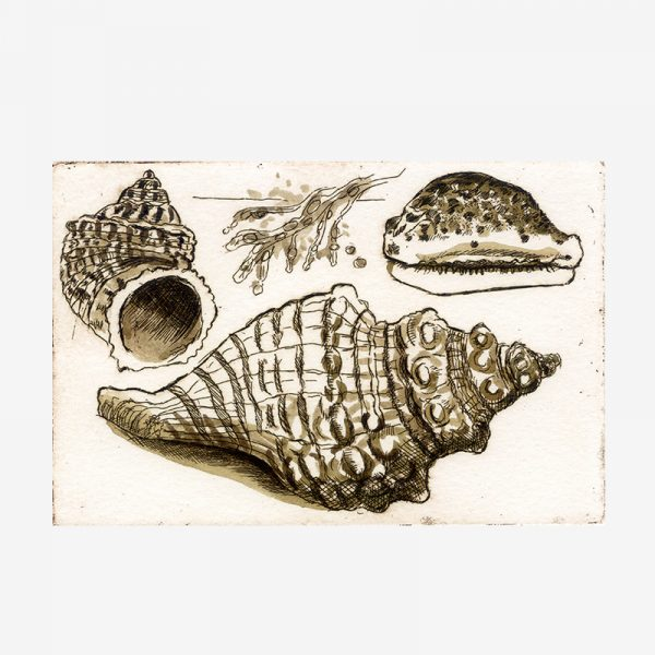 Shells Study II - etching